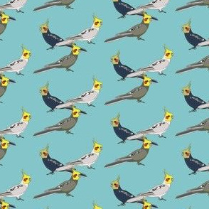 Cockatiels - Blue