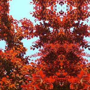 RED_FOLIAGE_OK