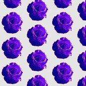 Rrrrose_saturated_violet_shop_thumb