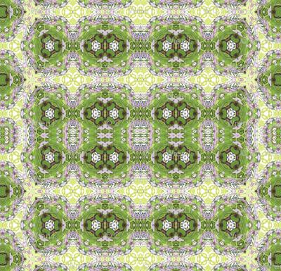 wisteria_lace4