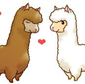 Rrllama_love_shop_thumb