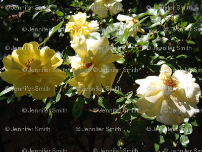 Yellow Rose Spray