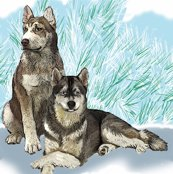 Rrsiberian_huskies5_shop_thumb