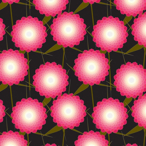 Pink Dahlia on Black
