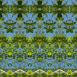 columns of beech 2