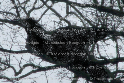 birdtree2_grackle
