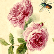 Roses and Bees