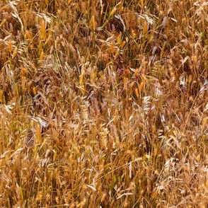 gold_grass_repeat