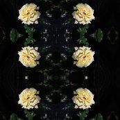 Rrr20120518_372_shop_thumb