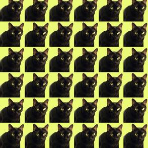 Velvet the Cat 5 Lime Green