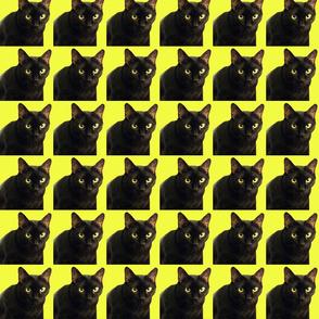 Velvet the Cat 10 Yellow
