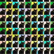 16 Velvet the Cat