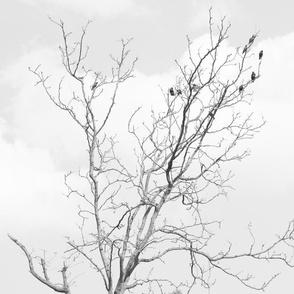 silver bird tree