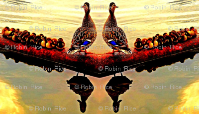 Ducklings at Dawn (centered)