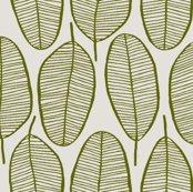Rrjani_leaves_olive_shop_thumb