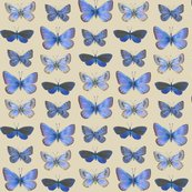 Rrrrrr0_butterflies3b_shop_thumb