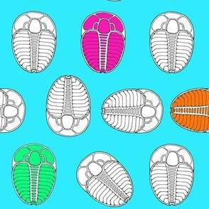 Trilobite Trot