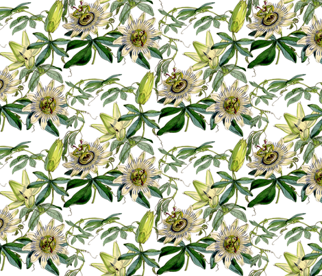 Passion Flower fabric by victoriagolden on Spoonflower - custom fabric