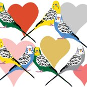 Rlove-budgies4_shop_thumb