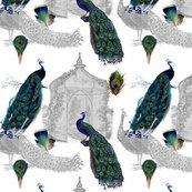 Rrrpeacocks_in_the_garden_shop_thumb