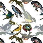 Rrrbirds_birds_birds_shop_thumb