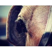 Rrramish_horse_blinders_shop_thumb