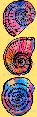 Amazing Ammonites 2!!!