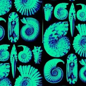 Amazing Ammonites!!!