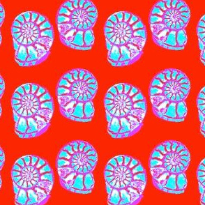 Amazing Ammonites 4