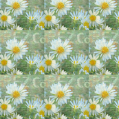 Daisy Company Digital Art
