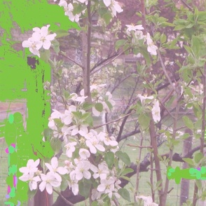 Apple_blossoms_pink_hue_with_green_masking