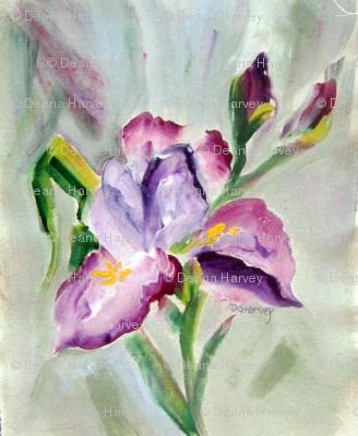 Iris Lavender_Swatch