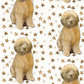 Soft Coated Wheaten Is a Star