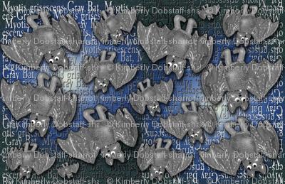 Gray Bat - Endangered -2
