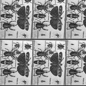Bugs_shop_thumb
