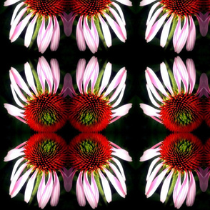 Cone Flowers in the dark
