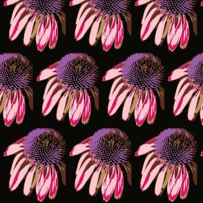 Cone Flowers in the dark in purple