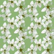 Rrrblackberry_blossom2_shop_thumb