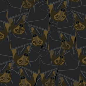 Cave Full of Bats