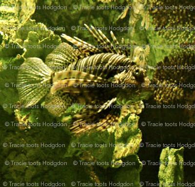 lionfishcrop