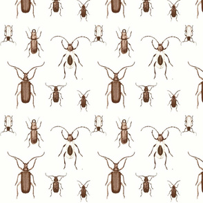 Chocolate Bugs Toile