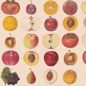 Rvintagefruitsmall_shop_thumb