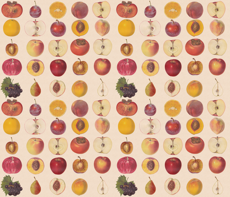 Small Vintage Fruit Assortment fabric by lyddiedoodles on Spoonflower - custom fabric