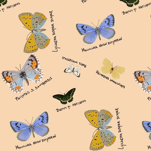 extinct butterflies