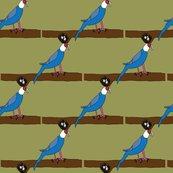 Rrrcarolina-parakeet3_shop_thumb