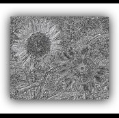 Rrsunflower_2embossedsketch_ed_ed_shop_thumb