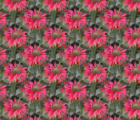 Spider Dahlia - darker version fabric by koalalady on Spoonflower - custom fabric