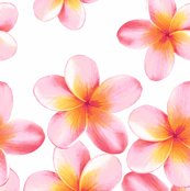 Rrrrrrrsunset_frangipani_border__shop_thumb