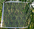 Rrrwillow_leaves_hdr_effect_ed_comment_185695_thumb