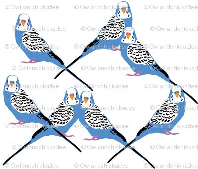 Parakeets Looking at You - Blue